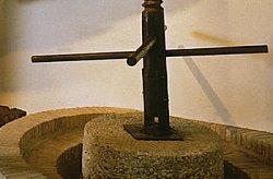 Museo dell'Olio d'Oliva a Bardolino (VR)