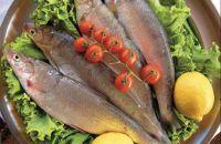 Pesce del Lago di Garda: alborella