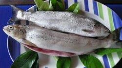 Pesce del Garda: Carpione