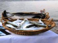 Pesci del Garda