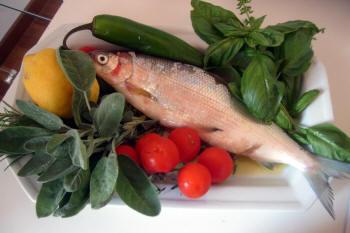 Pesce del Lago di Garda