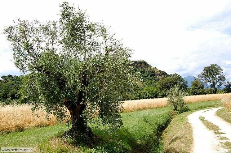 Foto Sentiero Rocca di Manerba