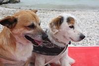 Spiagge per cani sul Lago di Garda