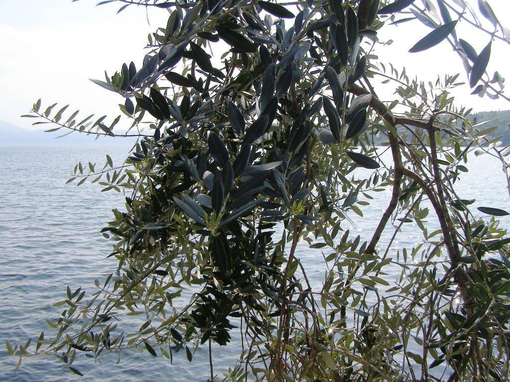 Salò (BS) Lago di Garda