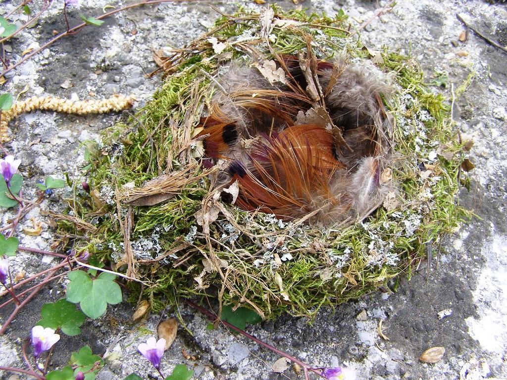 Resti di nido