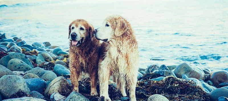 Spiaggia per cani a Toscolano Maderno
