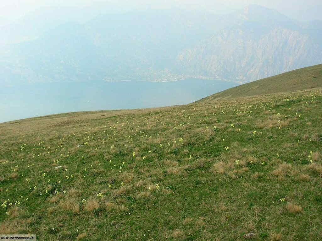 Monte Baldo_795.jpg