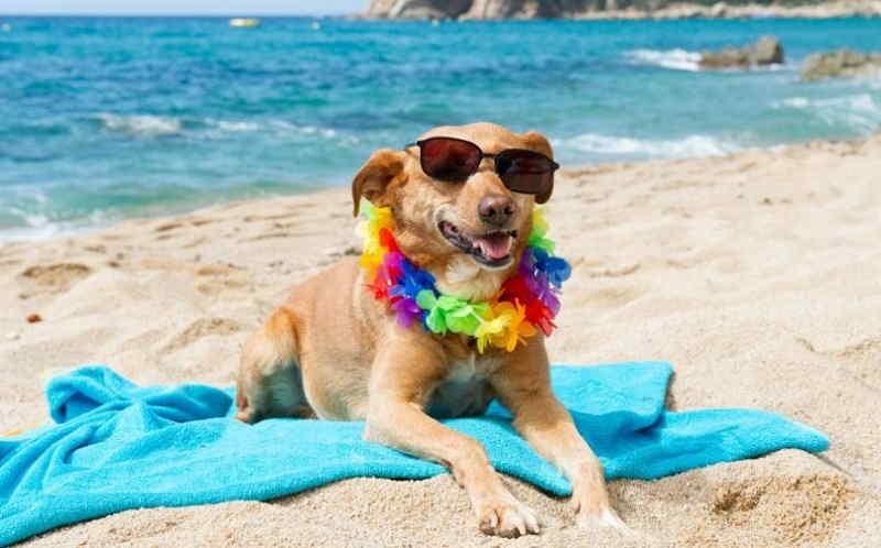 Spiaggia per cani a Manerba del Garda