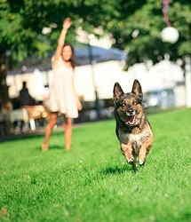Area Cani a Sirmione