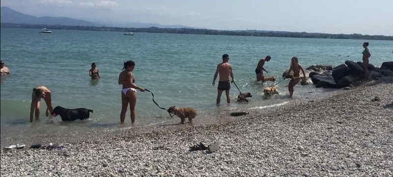 Spiaggia per cani a Peschiera del Garda