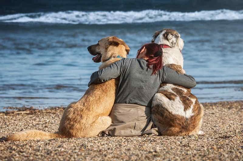 Spiaggia per cani a Salò (BS)