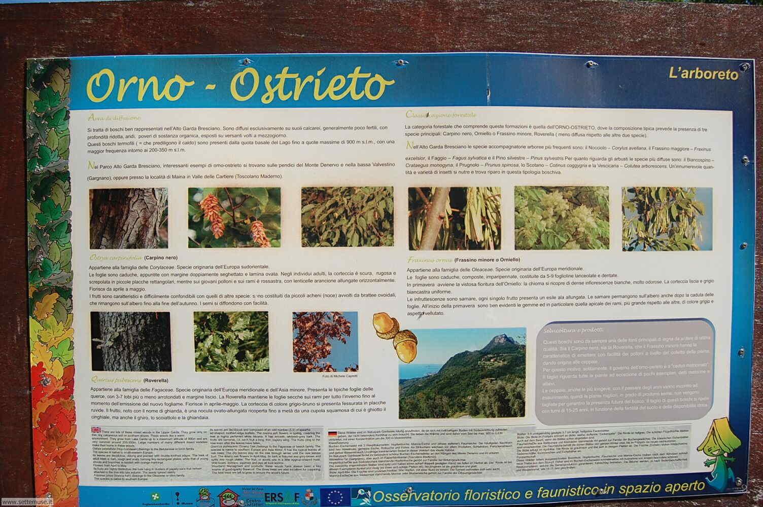 Orno - Ostrieto